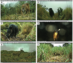 NEW scientific publication about large mammals in Ecuador